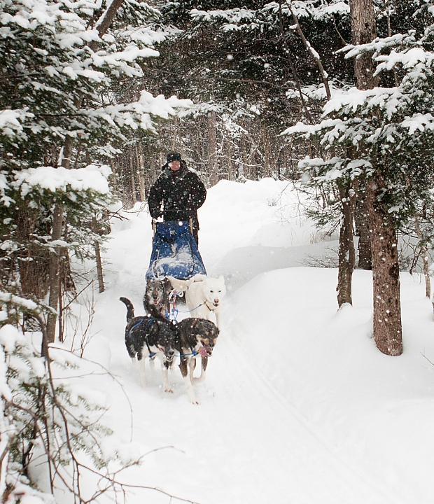 Bill mushing